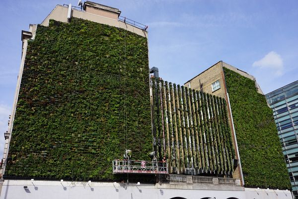 Projects The Urban Greening Company