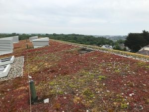 Repairing Large greenroof Anglesey