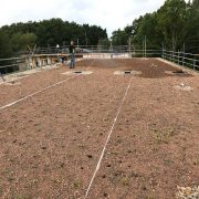 Green roof plugs planted and watering to help them thrive