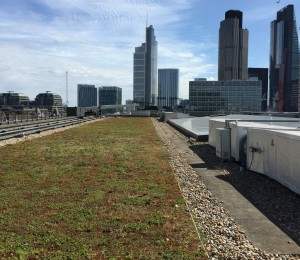 City flooding reduced by green roofs