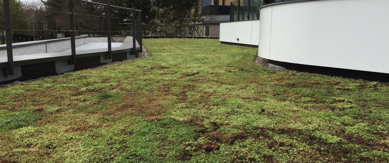 Re-greening academia