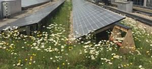 Bees on Bio-solar roof in The City, London