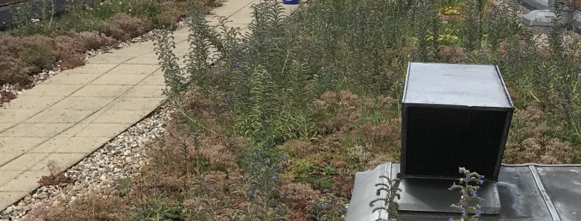 Green Roof brings breath of fresh air to Muslim Cultural Heritage Centre