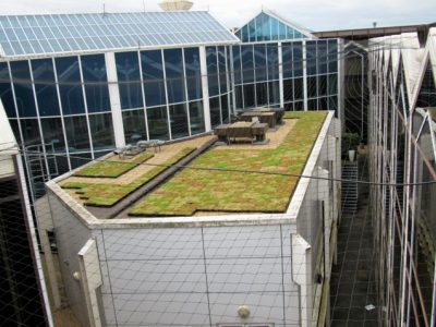 Green roof urban greening project