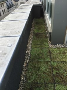 Roof Greening at Radisson Blu, Mayfair