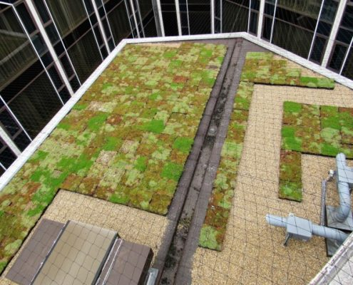 Re-greening Radisson Blu, Heathrow Roof Garden green roof