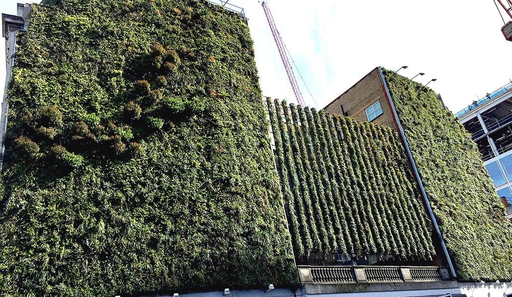Living walls and green wall installations