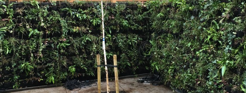 Paddington Bear to be proud of living wall