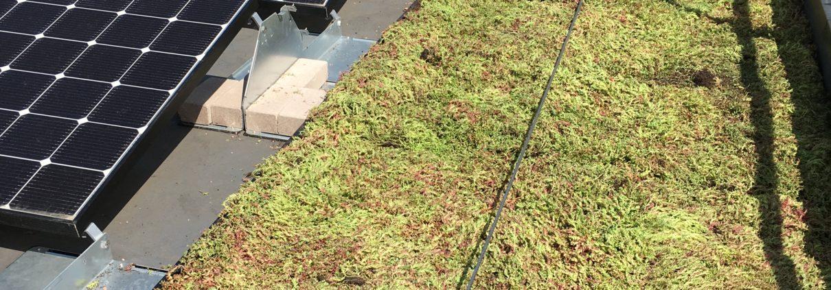 Bio-solar roof to benefit Social Housing