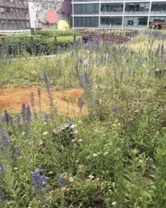 Encouraging Biodiversity and Invertebrates In Victoria