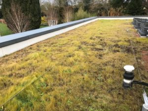 Green roof maintenance example