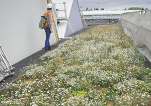 living roof maintenance