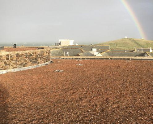 800sqm of green roof in Cornwall