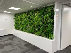 living wall in the office (biophilia)