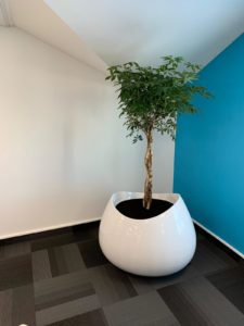 one of many planters creating biophilia