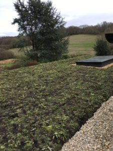 wildflower green roof
