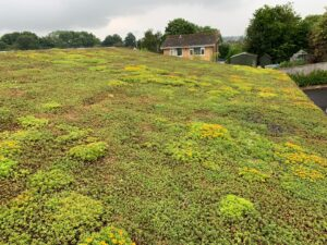 lush sedum green roof